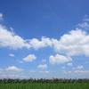 畑の地平線