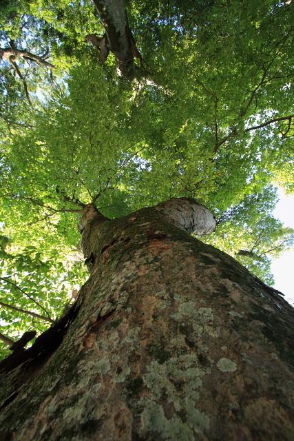 木陰 つつまれて