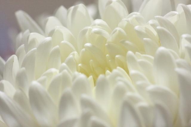 花びらの情景