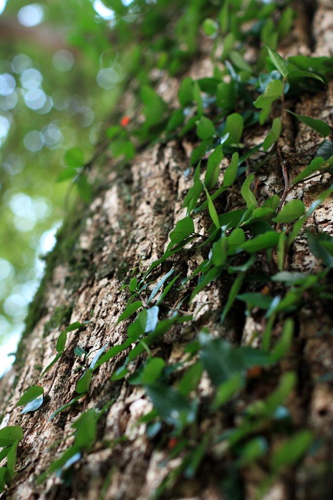 木陰に落ちゆく光