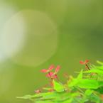 CANON Canon EOS 40Dで撮影した植物(木漏れ日に向かって)の写真(画像)