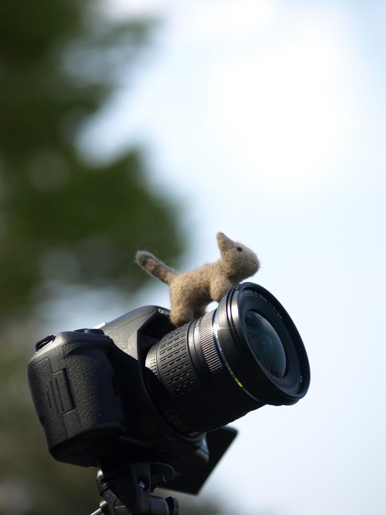 カメラよ、あれが多摩川の水面だ