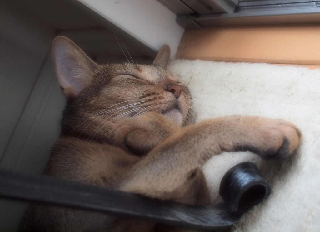 猫は幸せな夢を見る