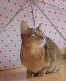 雨やむかな?