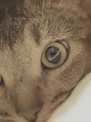 瞳の中の…