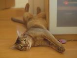 猫にも夏休みが必要だ