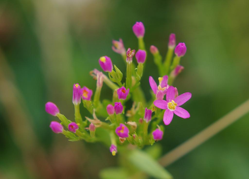 雑草という花