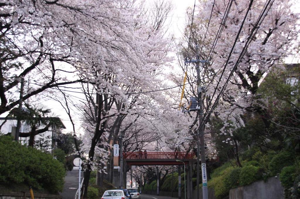 桜坂その1
