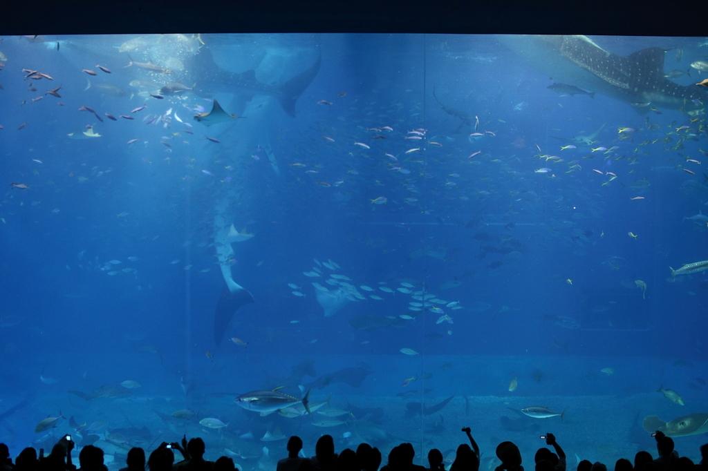 サメ 立ってる。