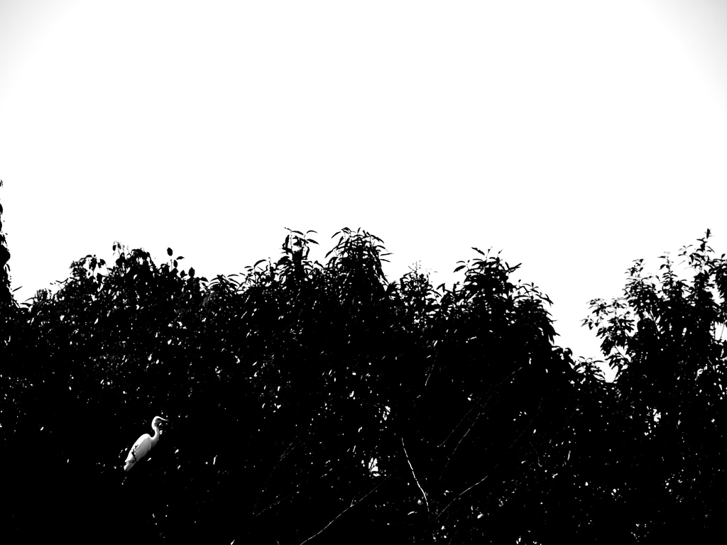trees and bird