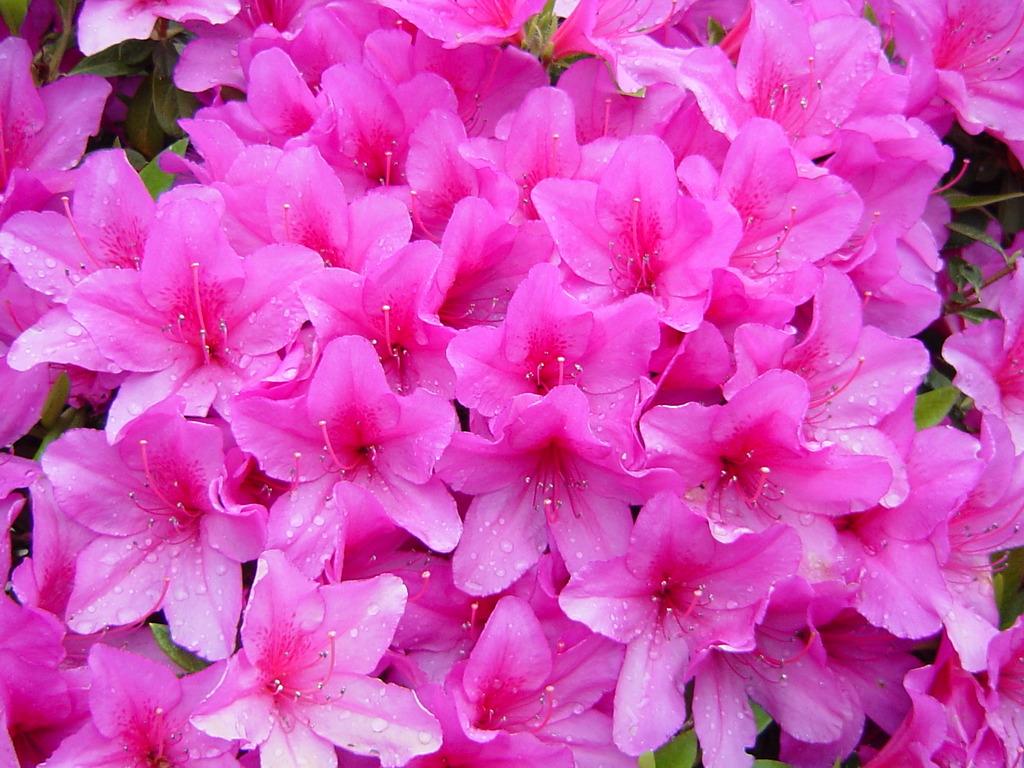 花束みたいな。。。