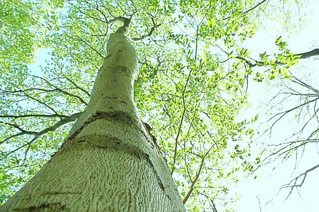 木が見てる?