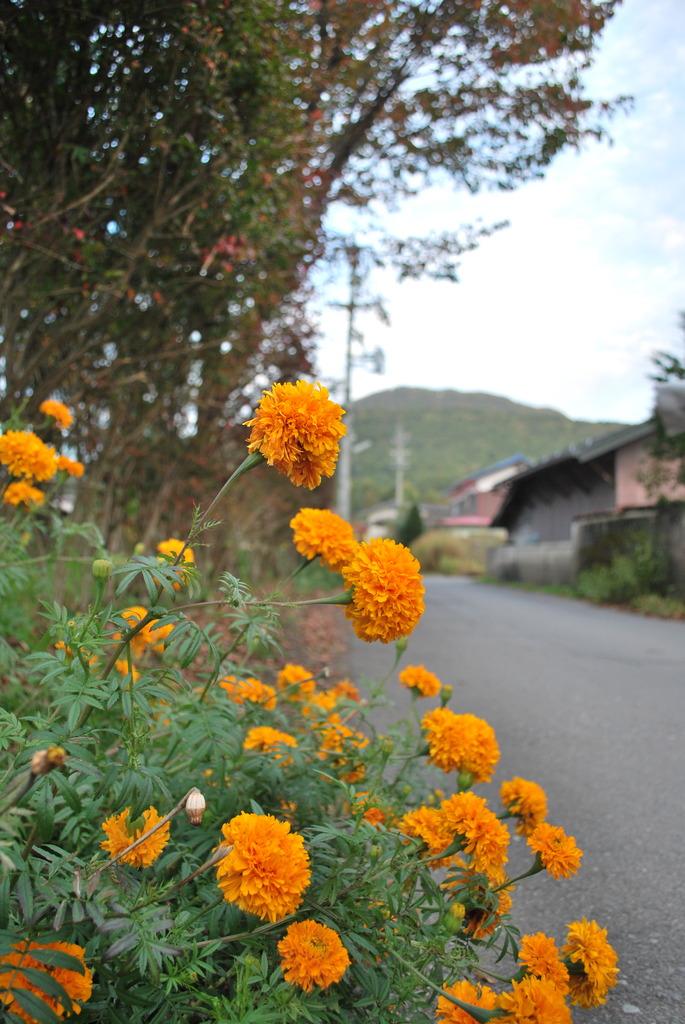 道ばたに咲く黄色