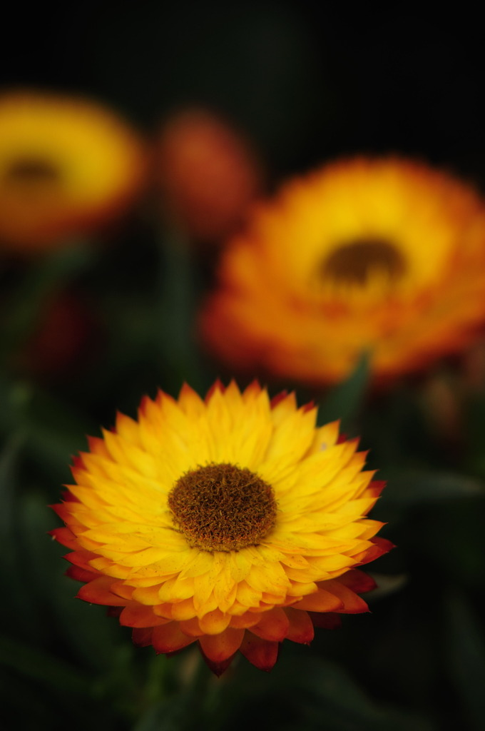 燃える花2