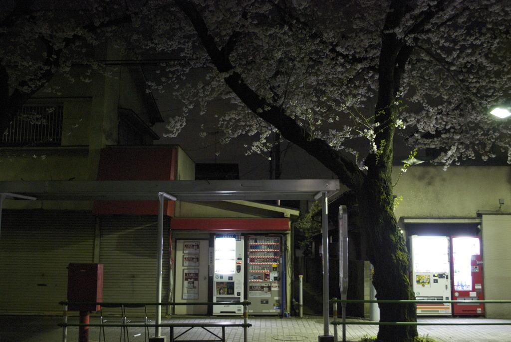 春の日の夜