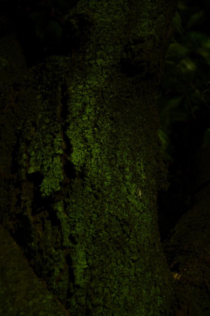 闇に浮かぶ木