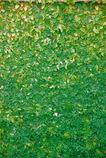 緑のグラデーション