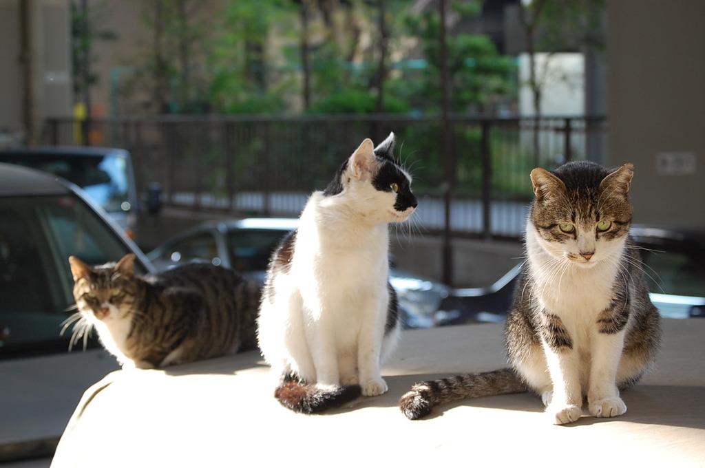 砦の三悪猫