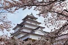 鶴ヶ城と桜