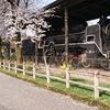 桜の木とSL