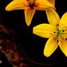 CANON Canon EOS 50Dで撮影した(ぼんやり黄色)の写真(画像)