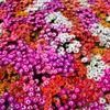 暖色の絨毯