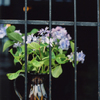 flower#03