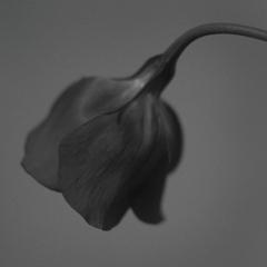 flower#02
