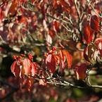 SONY NEX-5で撮影した(秋)の写真(画像)