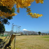 銀杏と富士