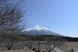 朝霧高原富士
