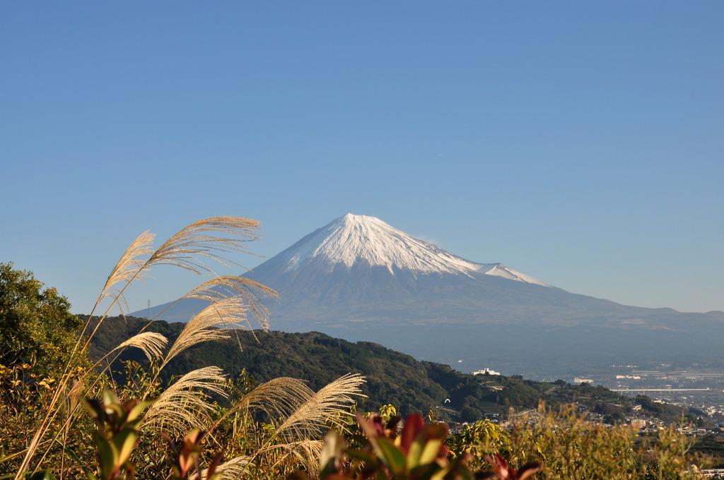 富士とススキ