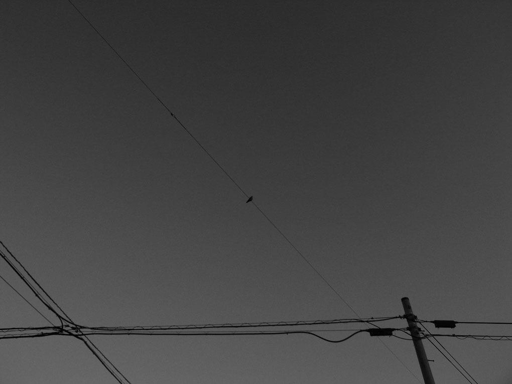photo271049