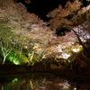 桜橋池 横