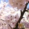ム~ミン谷の春