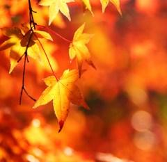 秋深まる。。。