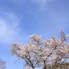Sakura20100404-1