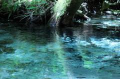 透き通る水の中に