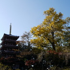 PANASONIC DMC-GH1で撮影した風景(本土寺)の写真(画像)
