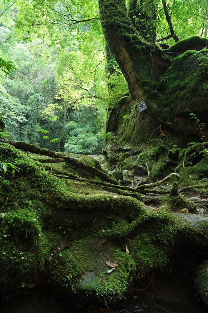 木霊の棲む森