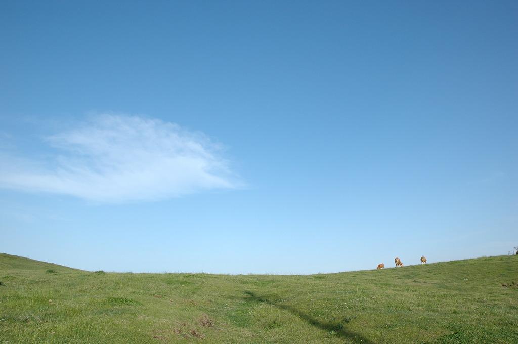 青と緑の狭間に