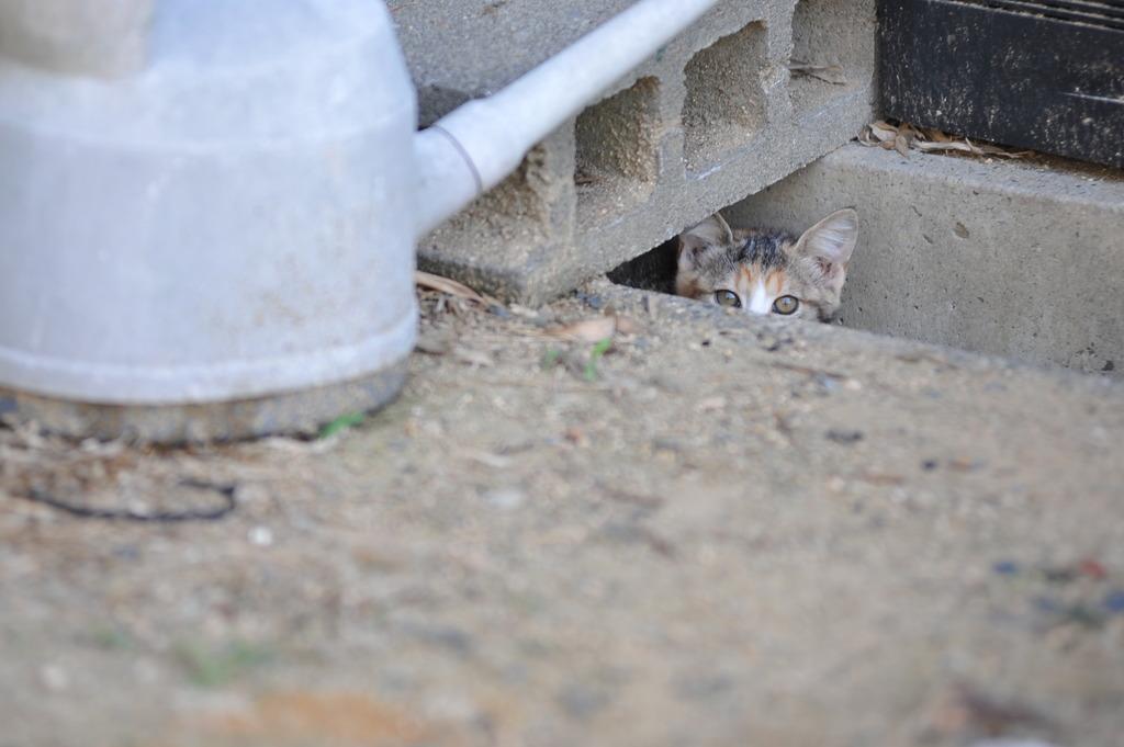 続、猫村さんは見た!