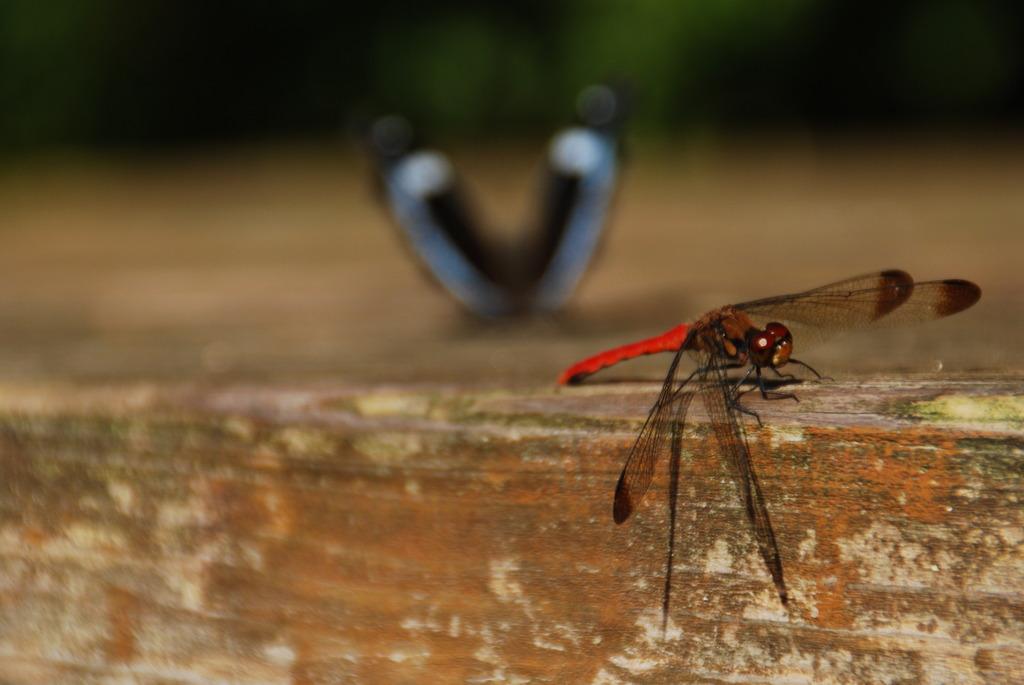 赤とんぼと蛾?