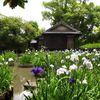 茶室と花菖蒲#2