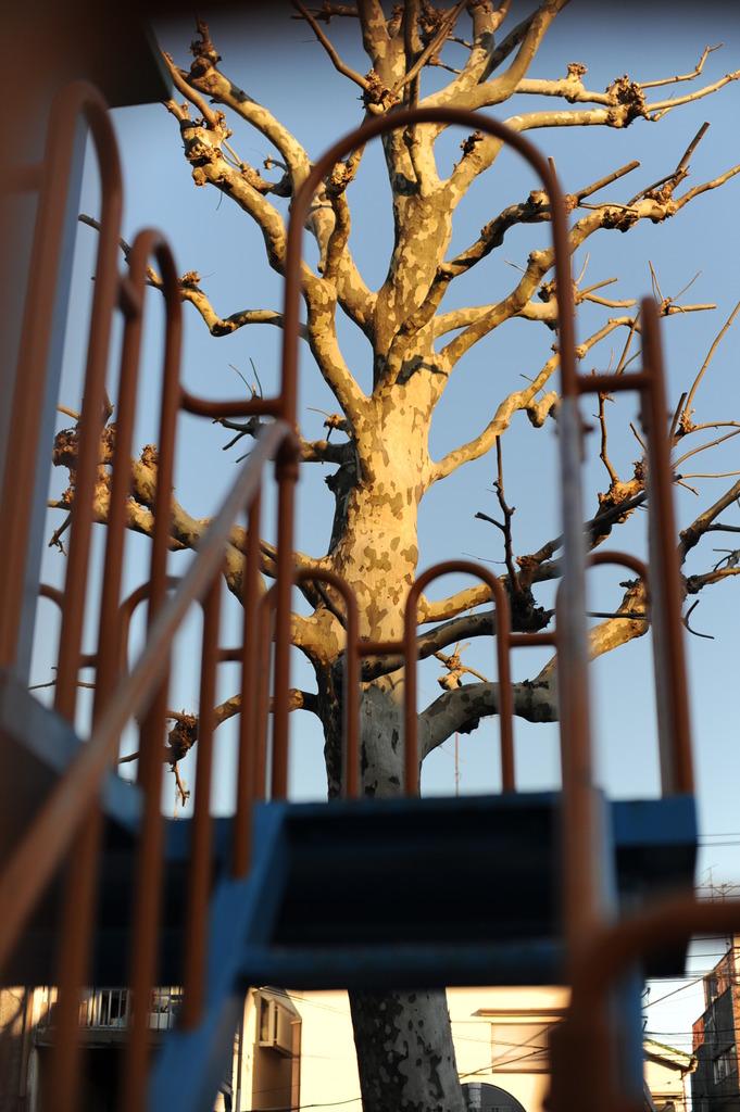 寒そうな木