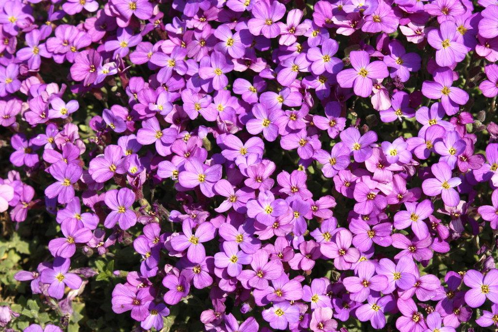 文句なし紫