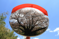 鏡の中の春