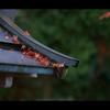 晩秋 | 寺巡り  10