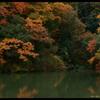 静かな森の彩。