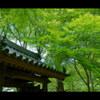 新緑×参道 < 01 >